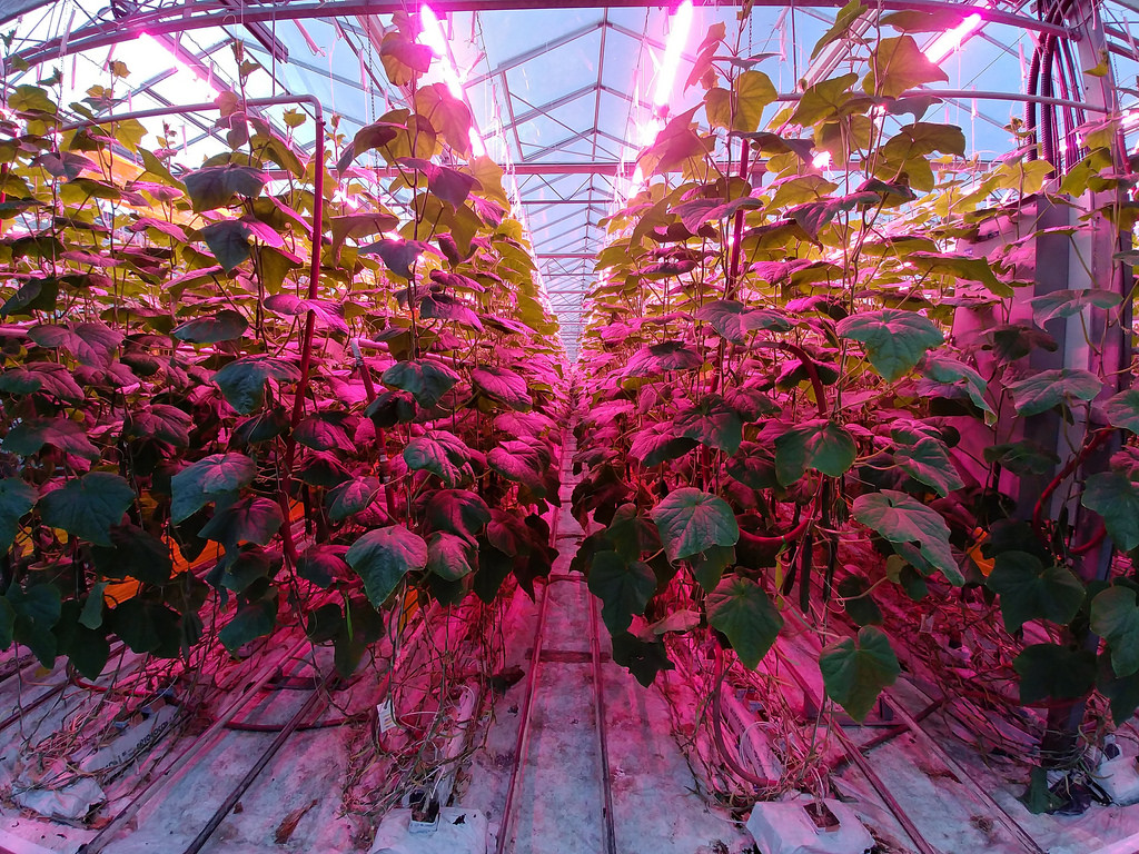 bc-greenhouse-longtable-dinner-leds-cucumbers