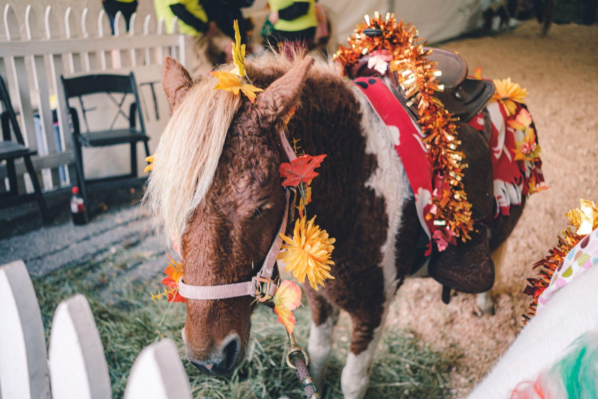 Kinder Pony Rides