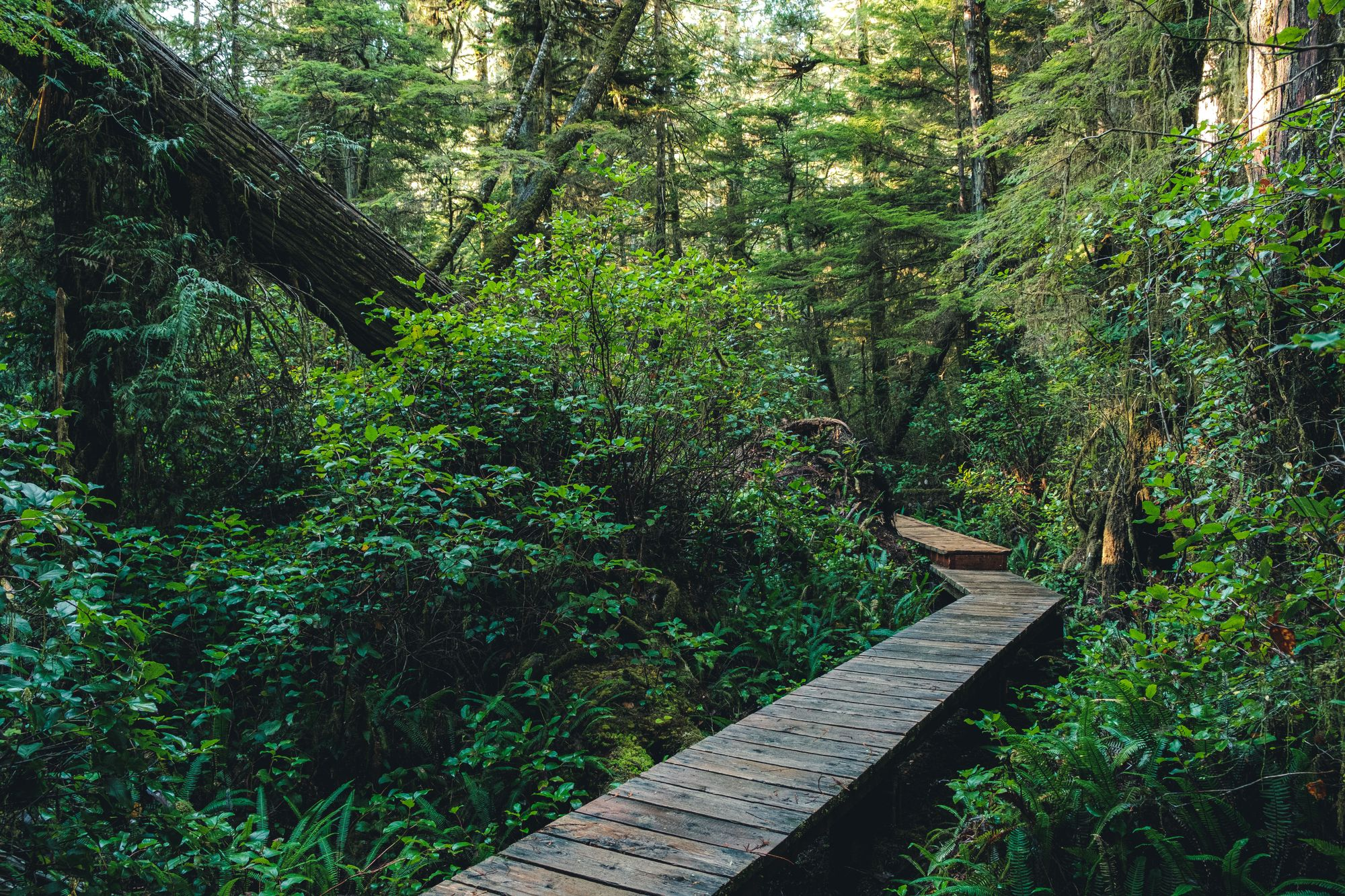 Tofino – Rainforest Hike